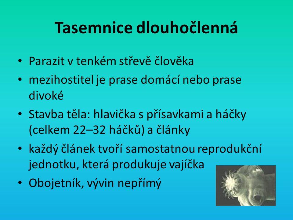 Tasemnice dlouhočlenná Parazit v tenkém střevě člověka mezihostitel je prase domácí nebo prase divoké Stavba těla: hlavička s přísavkami a háčky (celk