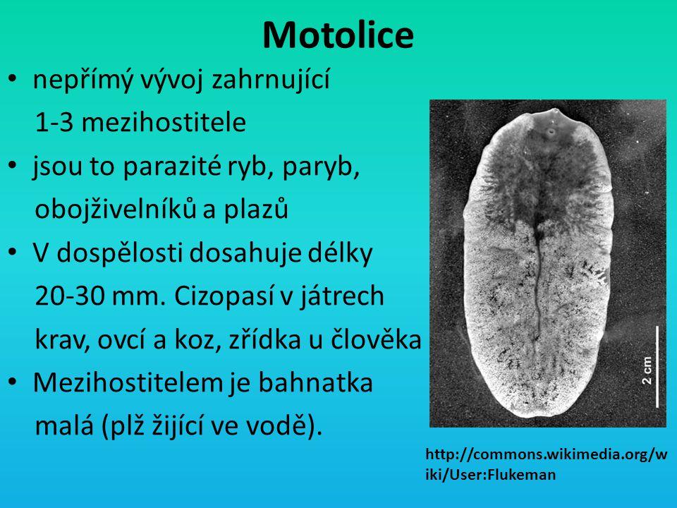 Motolice nepřímý vývoj zahrnující 1-3 mezihostitele jsou to parazité ryb, paryb, obojživelníků a plazů V dospělosti dosahuje délky 20-30 mm. Cizopasí