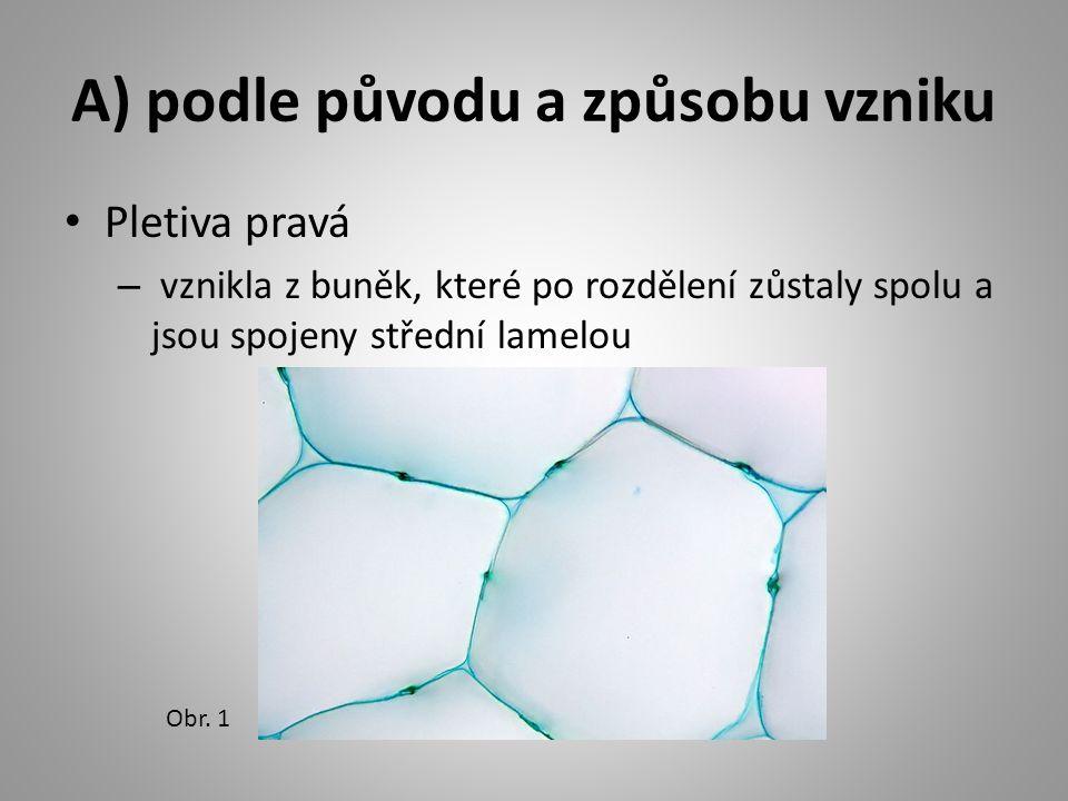 A) podle původu a způsobu vzniku Pletiva pravá – vznikla z buněk, které po rozdělení zůstaly spolu a jsou spojeny střední lamelou Obr.