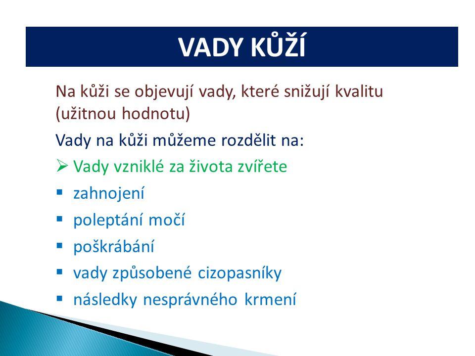 VADY KŮŽÍ Na kůži se objevují vady, které snižují kvalitu (užitnou hodnotu) Vady na kůži můžeme rozdělit na:  Vady vzniklé za života zvířete  zahnoj