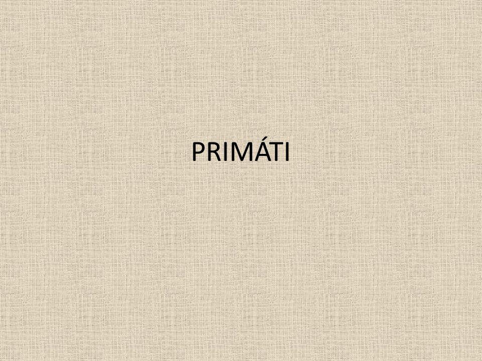 Znaky: V učebnici (str.14) vyhledej a napiš základní znaky primátů.