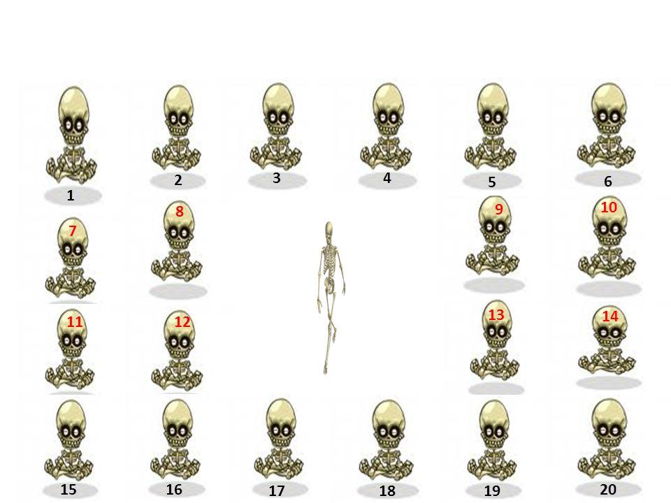 Ze kterých částí je složena kost?
