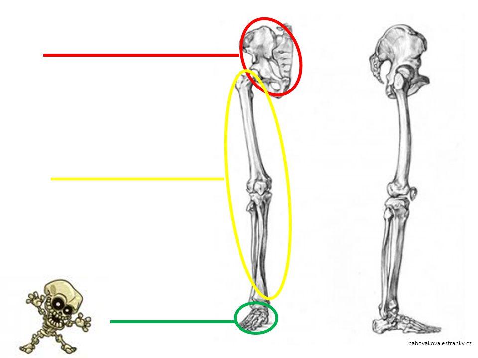 Které kosti tvoří kostru předloktí?