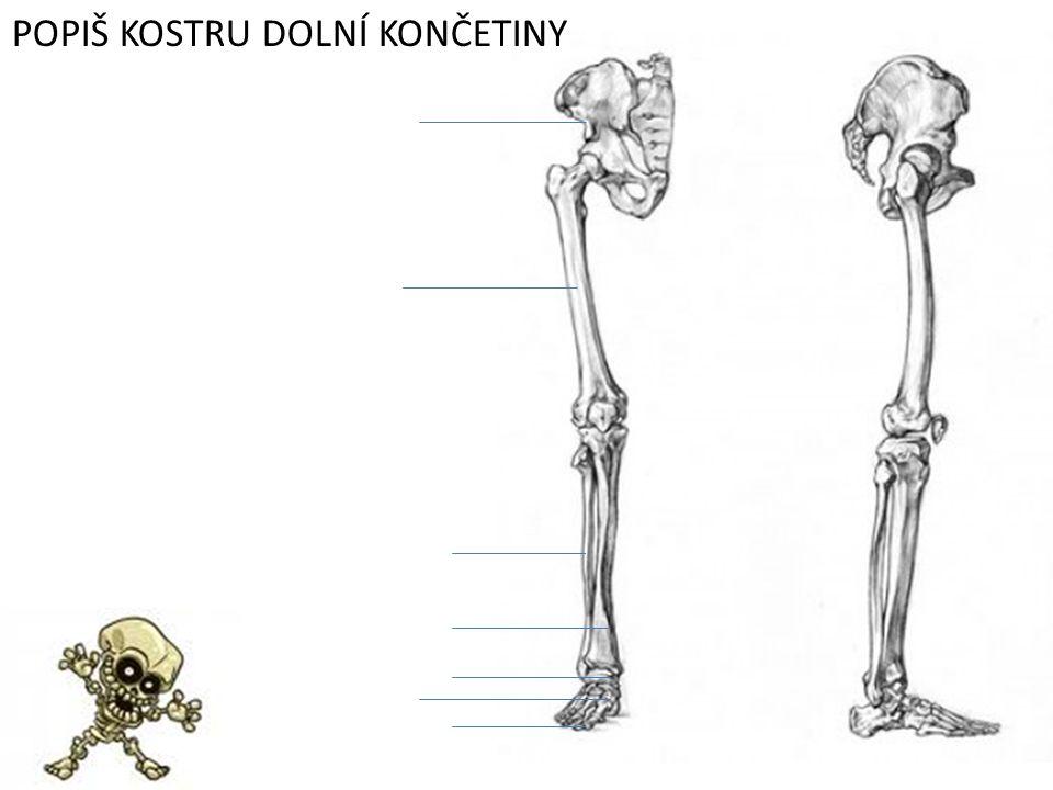 Které kosti tvoří pletenec horní končetiny?