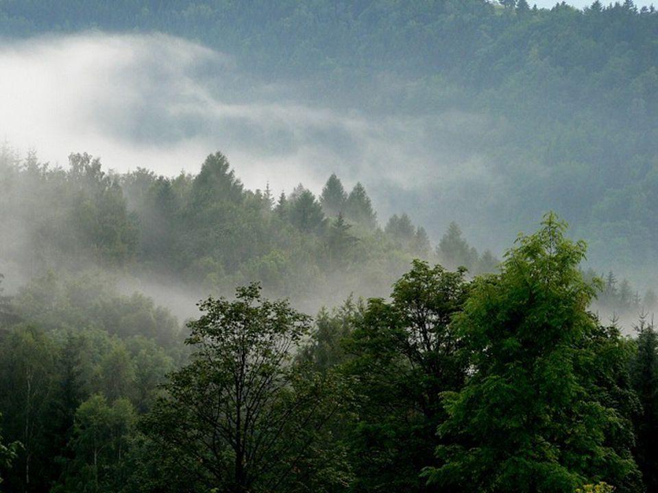 Světlo maluje Jiným způsobem nás osloví les po dešti na horách