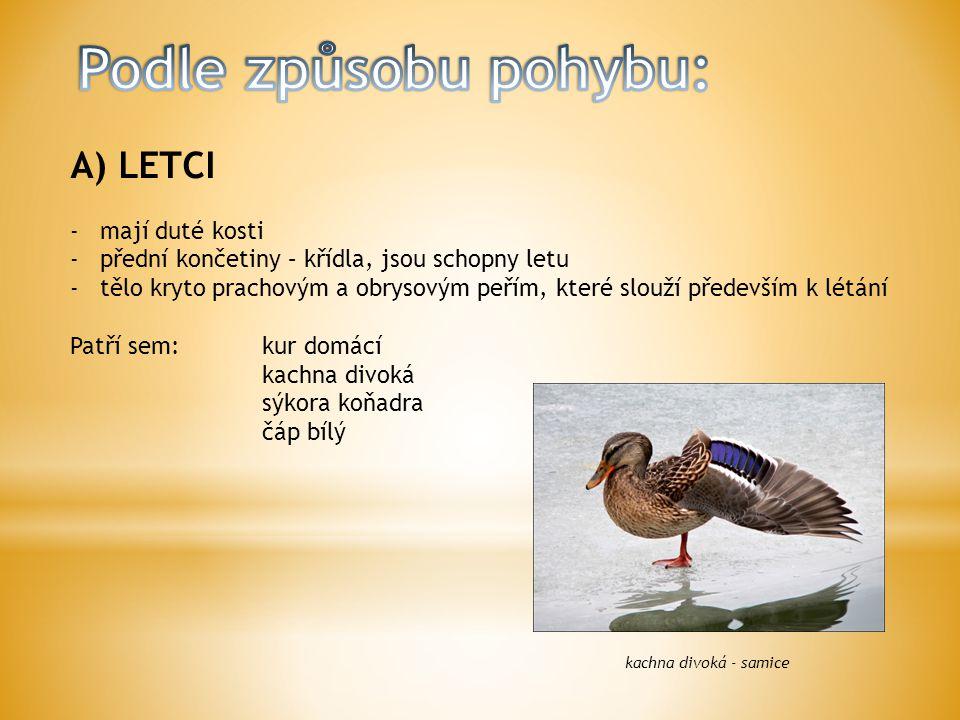 A) LETCI -mají duté kosti -přední končetiny – křídla, jsou schopny letu -tělo kryto prachovým a obrysovým peřím, které slouží především k létání Patří sem:kur domácí kachna divoká sýkora koňadra čáp bílý kachna divoká - samice