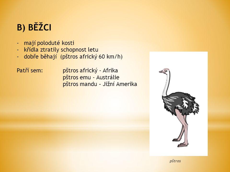 B) BĚŽCI -mají poloduté kosti -křídla ztratily schopnost letu -dobře běhají (pštros africký 60 km/h) Patří sem:pštros africký - Afrika pštros emu - Austrálie pštros mandu – Jižní Amerika pštros