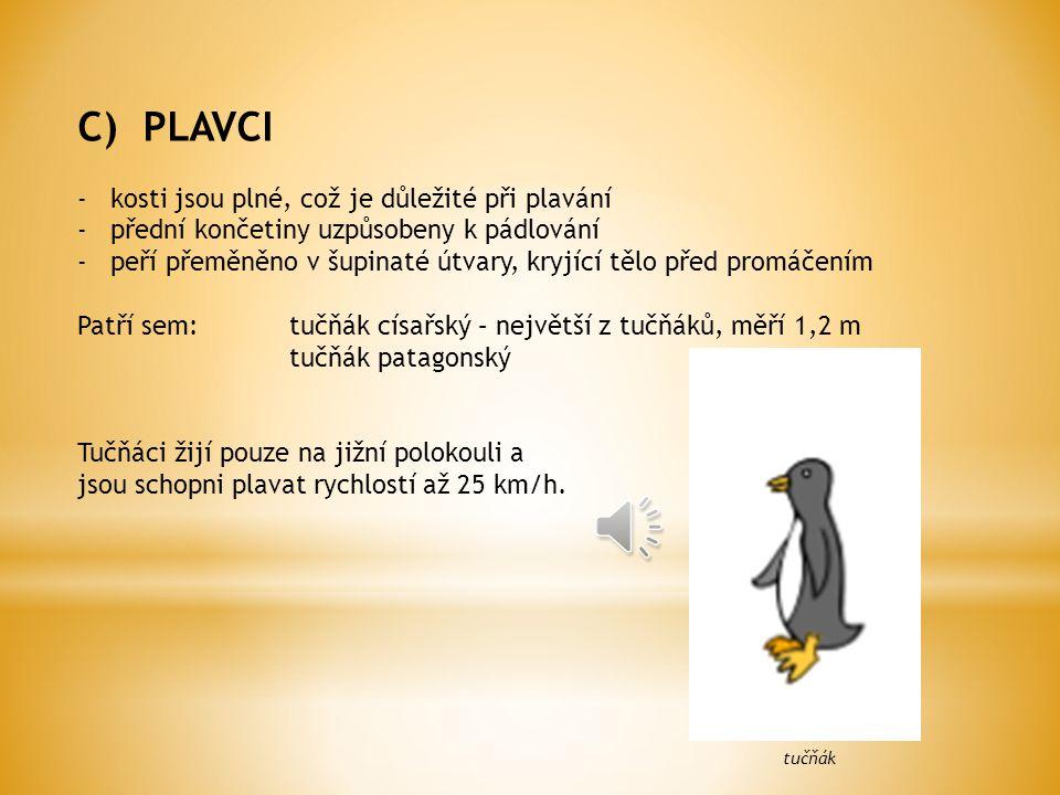C) PLAVCI -kosti jsou plné, což je důležité při plavání -přední končetiny uzpůsobeny k pádlování -peří přeměněno v šupinaté útvary, kryjící tělo před promáčením Patří sem:tučňák císařský – největší z tučňáků, měří 1,2 m tučňák patagonský Tučňáci žijí pouze na jižní polokouli a jsou schopni plavat rychlostí až 25 km/h.