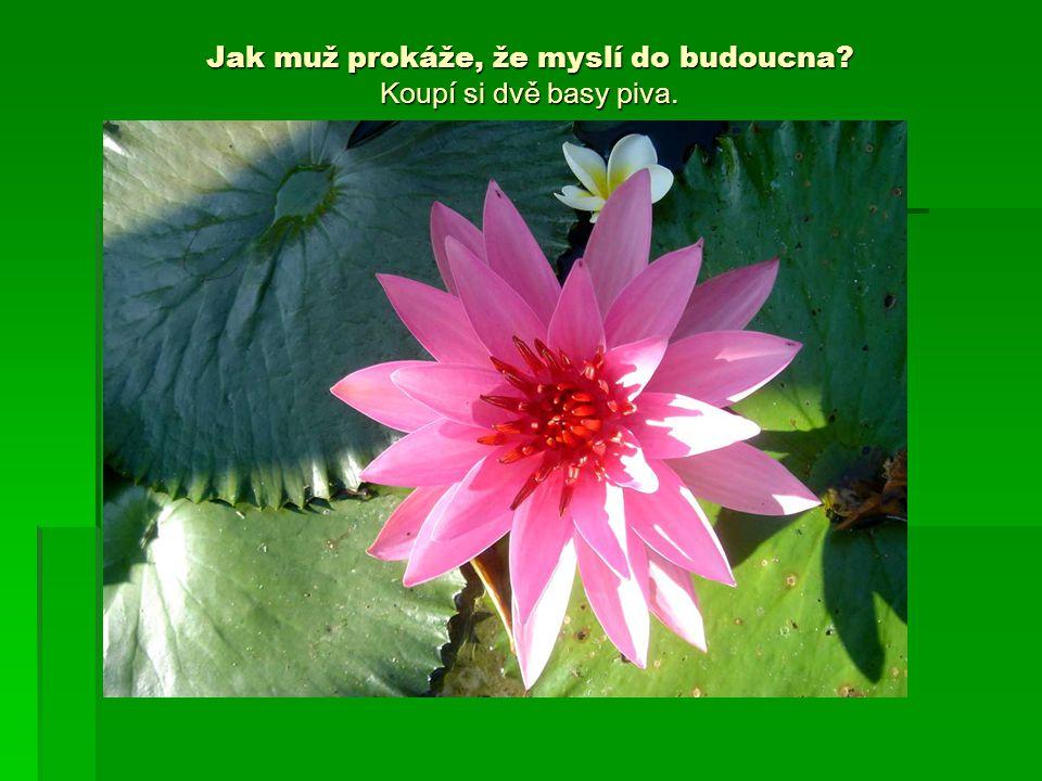 O mužích Proč Bůh stvořil muže? Protože vibrátorem trávník neposečete !