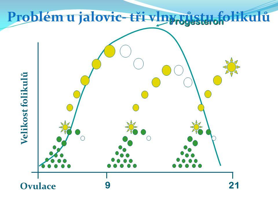 Progesteron Problém u jalovic- tři vlny růstu folikulů Ovulace 21 Velikost folikulů 9