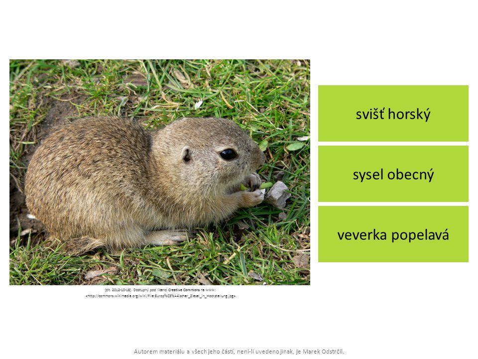 Autorem materiálu a všech jeho částí, není-li uvedeno jinak, je Marek Odstrčil. svišť horský veverka popelavá sysel obecný [cit. 2012-10-16]. Dostupný