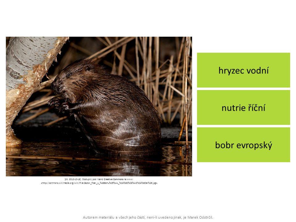 Autorem materiálu a všech jeho částí, není-li uvedeno jinak, je Marek Odstrčil. hryzec vodní bobr evropský nutrie říční [cit. 2012-10-16]. Dostupný po