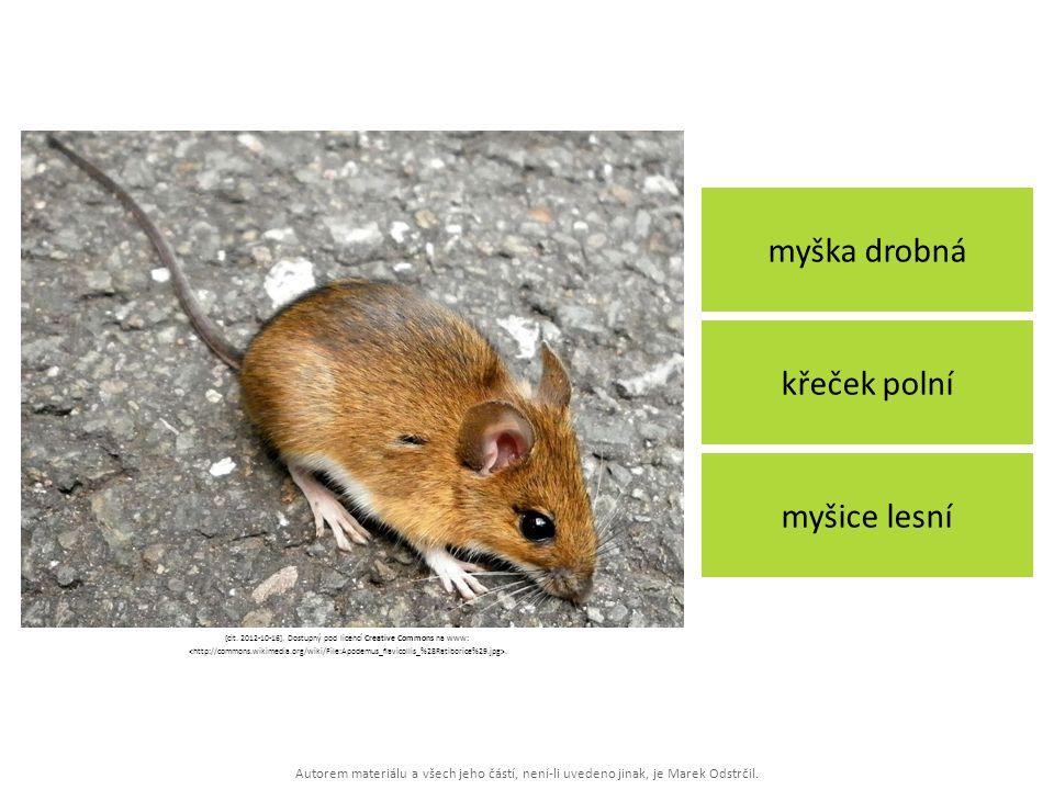 Autorem materiálu a všech jeho částí, není-li uvedeno jinak, je Marek Odstrčil. myška drobná myšice lesní křeček polní [cit. 2012-10-16]. Dostupný pod