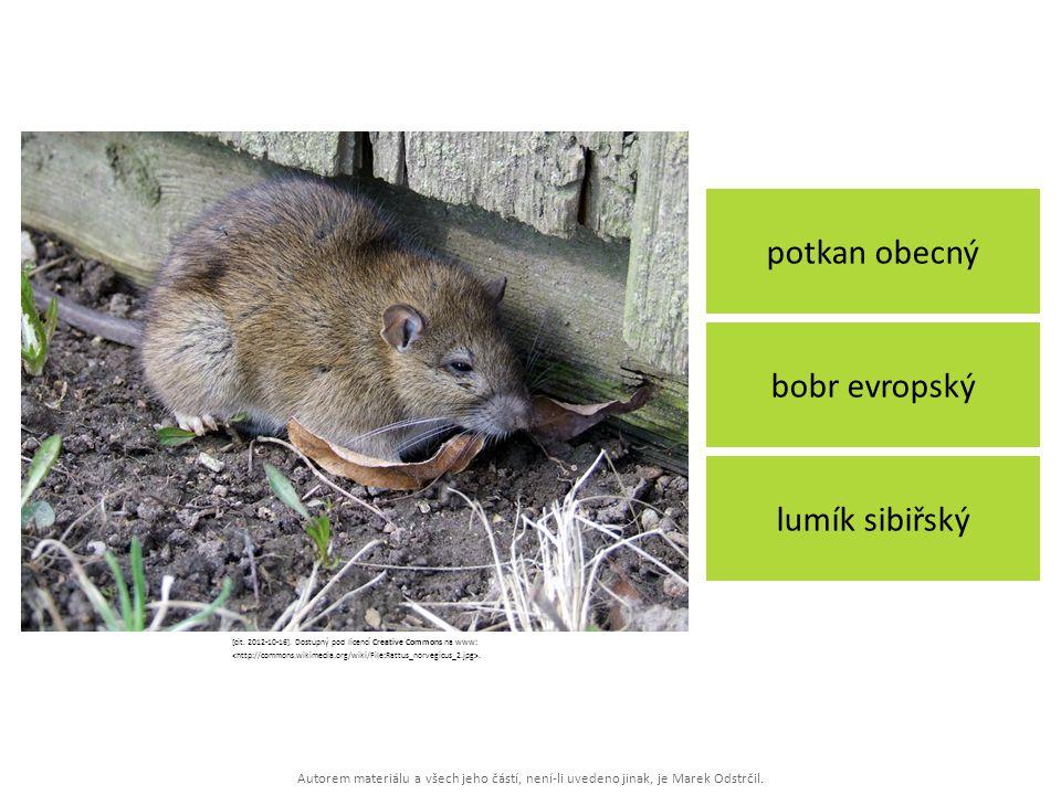 Autorem materiálu a všech jeho částí, není-li uvedeno jinak, je Marek Odstrčil. potkan obecný lumík sibiřský bobr evropský [cit. 2012-10-16]. Dostupný