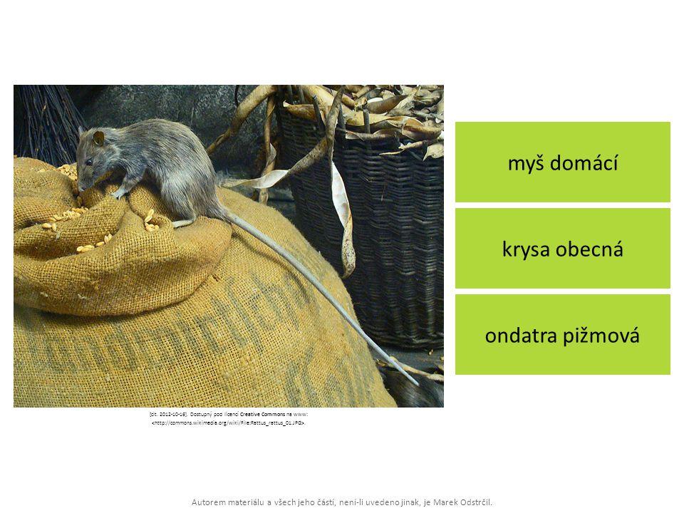 Autorem materiálu a všech jeho částí, není-li uvedeno jinak, je Marek Odstrčil. myš domácí ondatra pižmová krysa obecná [cit. 2012-10-16]. Dostupný po