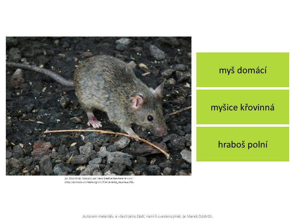 Autorem materiálu a všech jeho částí, není-li uvedeno jinak, je Marek Odstrčil. myš domácí hraboš polní myšice křovinná [cit. 2012-10-16]. Dostupný po