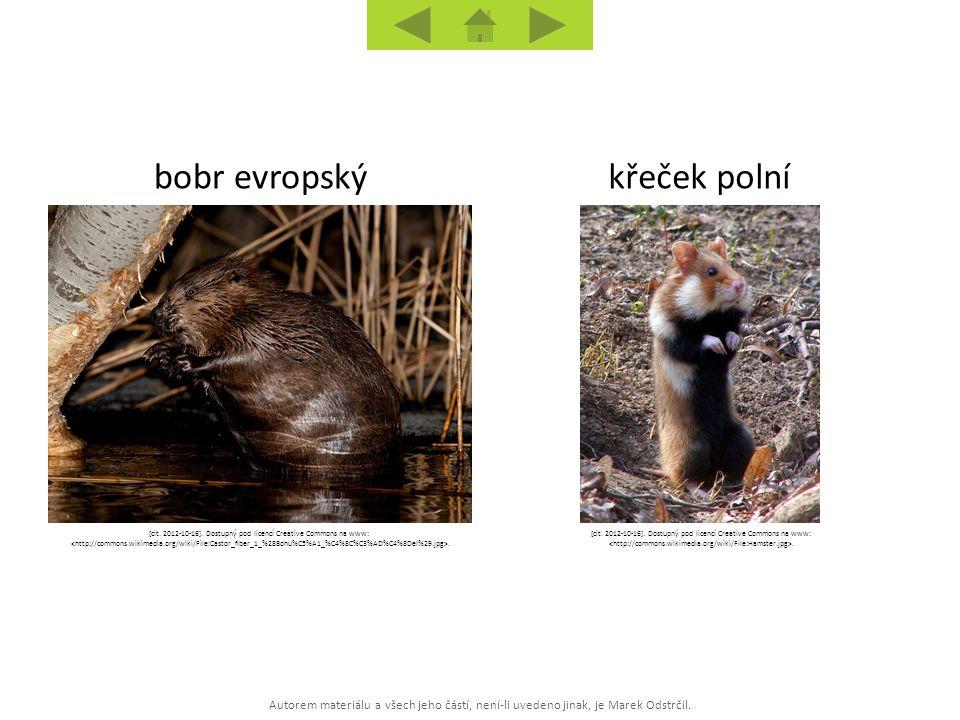 Autorem materiálu a všech jeho částí, není-li uvedeno jinak, je Marek Odstrčil. křeček polníbobr evropský [cit. 2012-10-16]. Dostupný pod licencí Crea
