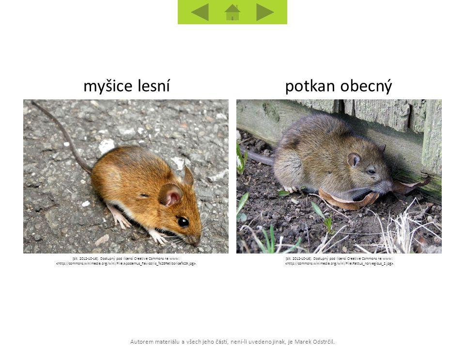 Autorem materiálu a všech jeho částí, není-li uvedeno jinak, je Marek Odstrčil. potkan obecnýmyšice lesní [cit. 2012-10-16]. Dostupný pod licencí Crea