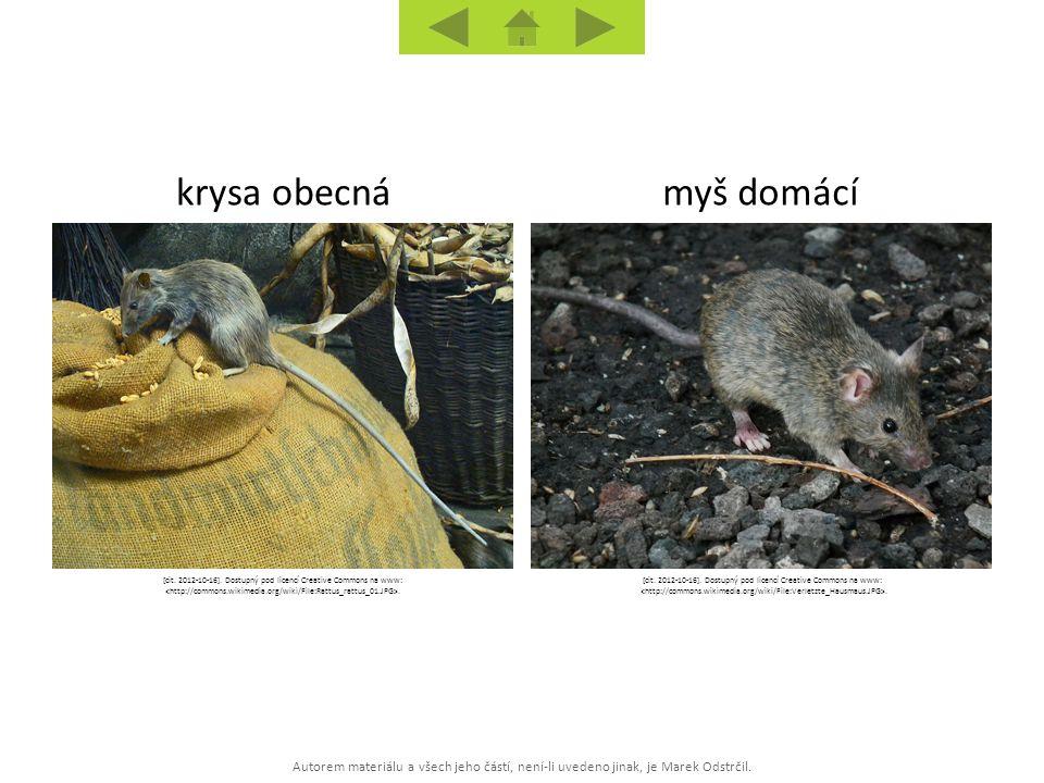 Autorem materiálu a všech jeho částí, není-li uvedeno jinak, je Marek Odstrčil. myš domácíkrysa obecná [cit. 2012-10-16]. Dostupný pod licencí Creativ