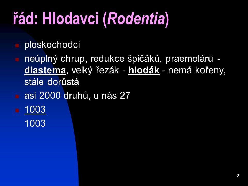 2 řád: Hlodavci ( Rodentia ) ploskochodci neúplný chrup, redukce špičáků, praemolárů - diastema, velký řezák - hlodák - nemá kořeny, stále dorůstá asi 2000 druhů, u nás 27 1003
