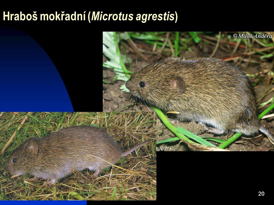 20 Hraboš mokřadní ( Microtus agrestis )