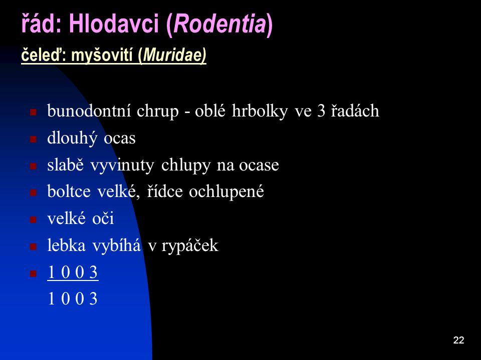 22 řád: Hlodavci ( Rodentia ) čeleď: myšovití ( Muridae) bunodontní chrup - oblé hrbolky ve 3 řadách dlouhý ocas slabě vyvinuty chlupy na ocase boltce velké, řídce ochlupené velké oči lebka vybíhá v rypáček 1 0 0 3