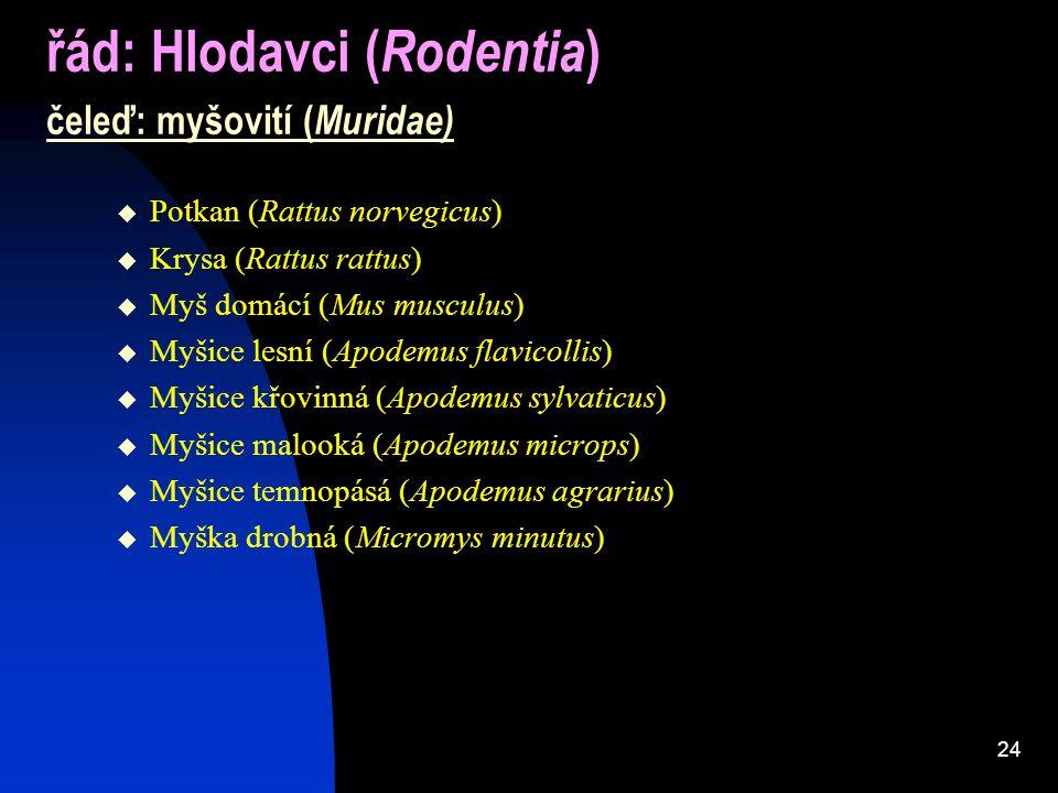 24 řád: Hlodavci ( Rodentia ) čeleď: myšovití ( Muridae)  Potkan (Rattus norvegicus)  Krysa (Rattus rattus)  Myš domácí (Mus musculus)  Myšice lesní (Apodemus flavicollis)  Myšice křovinná (Apodemus sylvaticus)  Myšice malooká (Apodemus microps)  Myšice temnopásá (Apodemus agrarius)  Myška drobná (Micromys minutus)
