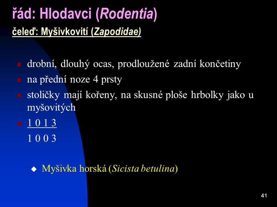 41 řád: Hlodavci ( Rodentia ) čeleď: Myšivkovití ( Zapodidae) drobní, dlouhý ocas, prodloužené zadní končetiny na přední noze 4 prsty stoličky mají kořeny, na skusné ploše hrbolky jako u myšovitých 1 0 1 3 1 0 0 3  Myšivka horská (Sicista betulina)