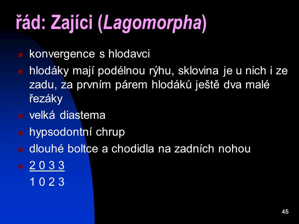 45 řád: Zajíci ( Lagomorpha ) konvergence s hlodavci hlodáky mají podélnou rýhu, sklovina je u nich i ze zadu, za prvním párem hlodáků ještě dva malé řezáky velká diastema hypsodontní chrup dlouhé boltce a chodidla na zadních nohou 2 0 3 3 1 0 2 3