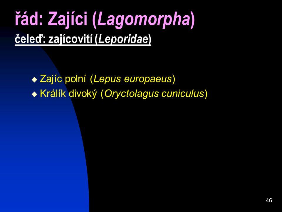 46 řád: Zajíci ( Lagomorpha ) čeleď: zajícovití ( Leporidae )  Zajíc polní (Lepus europaeus)  Králík divoký (Oryctolagus cuniculus)