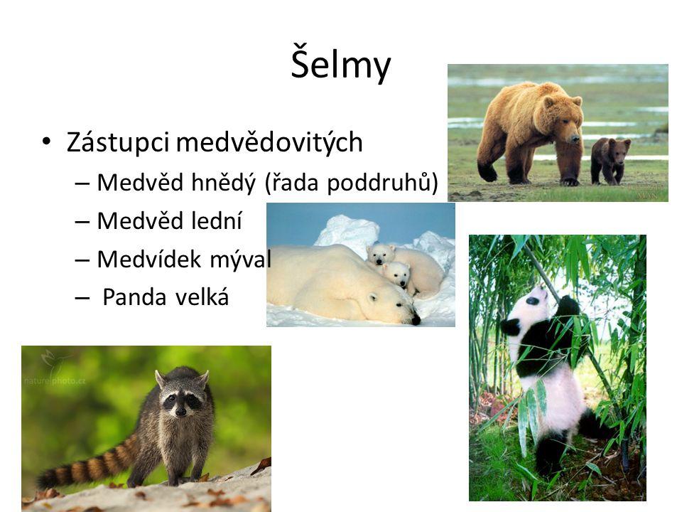 Šelmy Zástupci medvědovitých – Medvěd hnědý (řada poddruhů) – Medvěd lední – Medvídek mýval – Panda velká