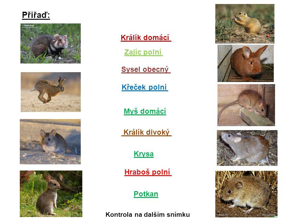 Přiřaď: Sysel obecný Křeček polní Hraboš polní Zajíc polní Králík domácí Krysa Králík divoký Myš domácí Potkan Kontrola na dalším snímku