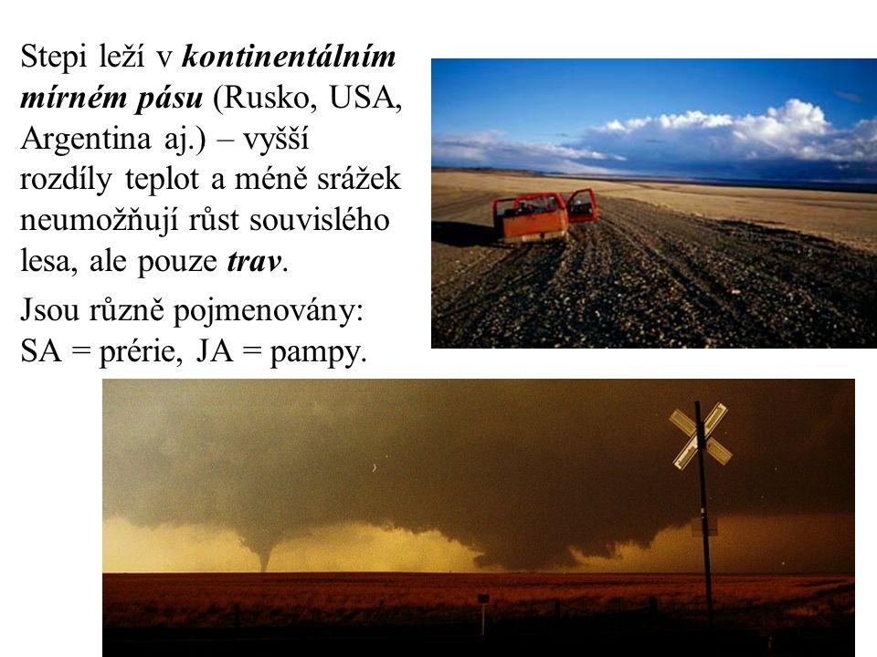 Stepi leží v kontinentálním mírném pásu (Rusko, USA, Argentina aj.) – vyšší rozdíly teplot a méně srážek neumožňují růst souvislého lesa, ale pouze tr