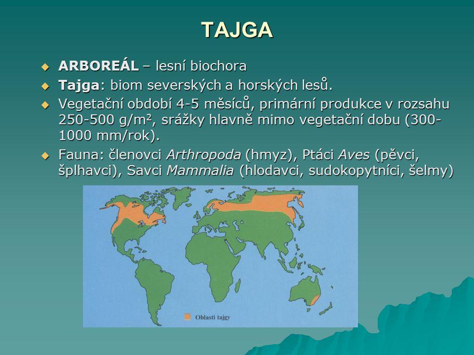 TAJGA  ARBOREÁL – lesní biochora  Tajga: biom severských a horských lesů.  Vegetační období 4-5 měsíců, primární produkce v rozsahu 250-500 g/m 2,