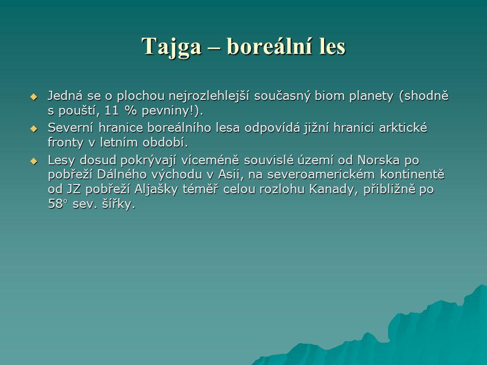Tajga – boreální les  Jedná se o plochou nejrozlehlejší současný biom planety (shodně s pouští, 11 % pevniny!).  Severní hranice boreálního lesa odp