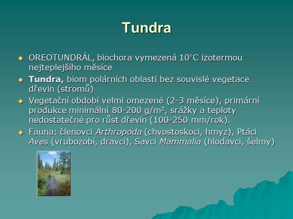 Tundra  OREOTUNDRÁL, biochora vymezená 10°C izotermou nejteplejšího měsíce  Tundra, biom polárních oblastí bez souvislé vegetace dřevin (stromů)  V