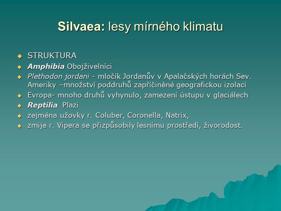 Silvaea: lesy mírného klimatu  STRUKTURA  Amphibia Obojživelníci  Plethodon jordani - mločík Jordanův v Apalačských horách Sev. Ameriky –množství p