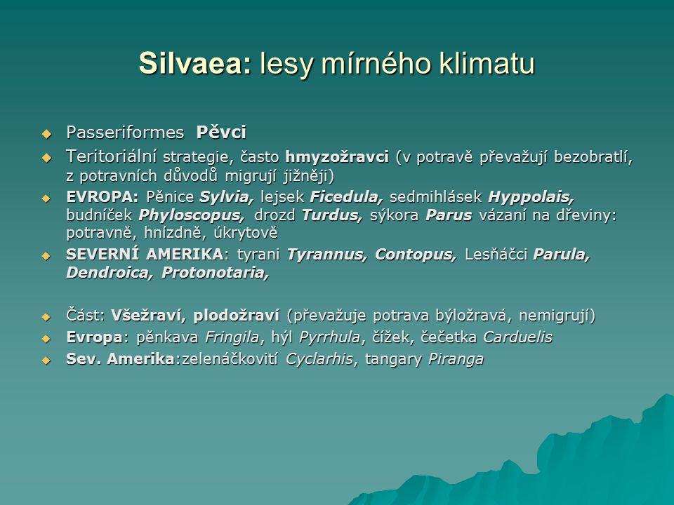 Silvaea: lesy mírného klimatu  Passeriformes Pěvci  Teritoriální strategie, často hmyzožravci (v potravě převažují bezobratlí, z potravních důvodů m