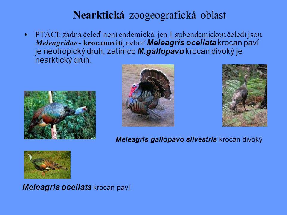 Nearktická zoogeografická oblast PTÁCI: žádná čeleď není endemická, jen 1 subendemickou čeledí jsou Meleagridae - krocanovití, neboť Meleagris ocellat