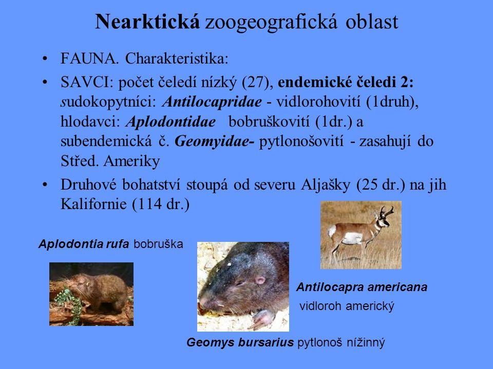 Nearktická zoogeografická oblast FAUNA. Charakteristika: SAVCI: počet čeledí nízký (27), endemické čeledi 2: sudokopytníci: Antilocapridae - vidloroho