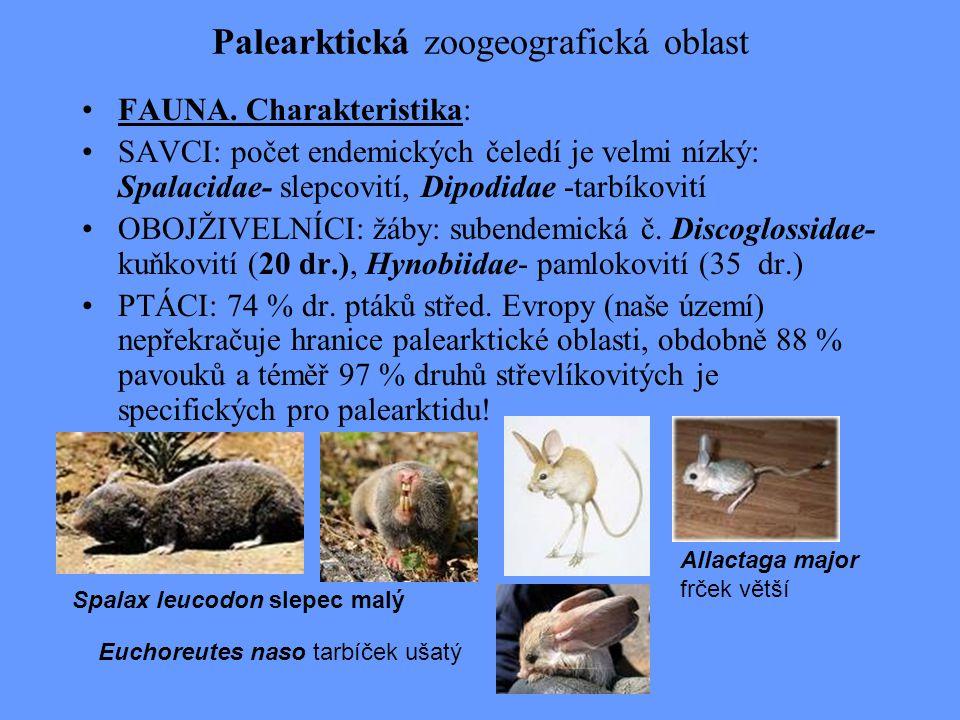 Palearktická zoogeografická oblast FAUNA. Charakteristika: SAVCI: počet endemických čeledí je velmi nízký: Spalacidae- slepcovití, Dipodidae -tarbíkov