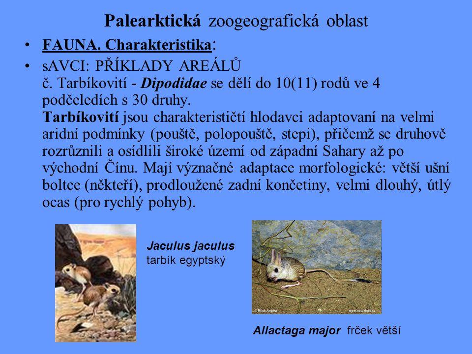 Palearktická zoogeografická oblast FAUNA. Charakteristika : sAVCI: PŘÍKLADY AREÁLŮ č. Tarbíkovití - Dipodidae se dělí do 10(11) rodů ve 4 podčeledích