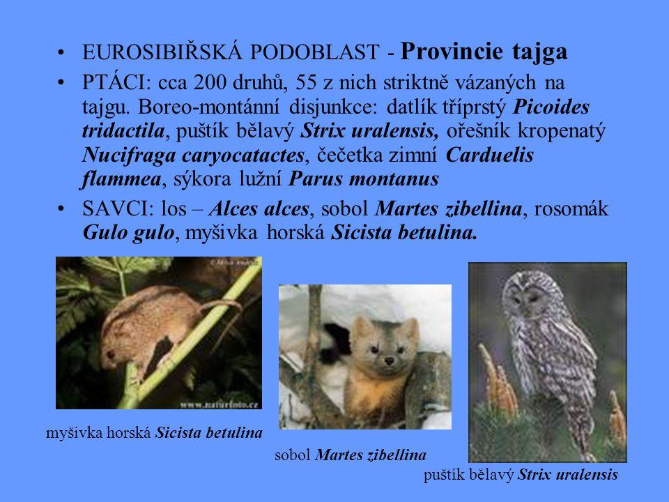 EUROSIBIŘSKÁ PODOBLAST - Provincie tajga PTÁCI: cca 200 druhů, 55 z nich striktně vázaných na tajgu. Boreo-montánní disjunkce: datlík tříprstý Picoide