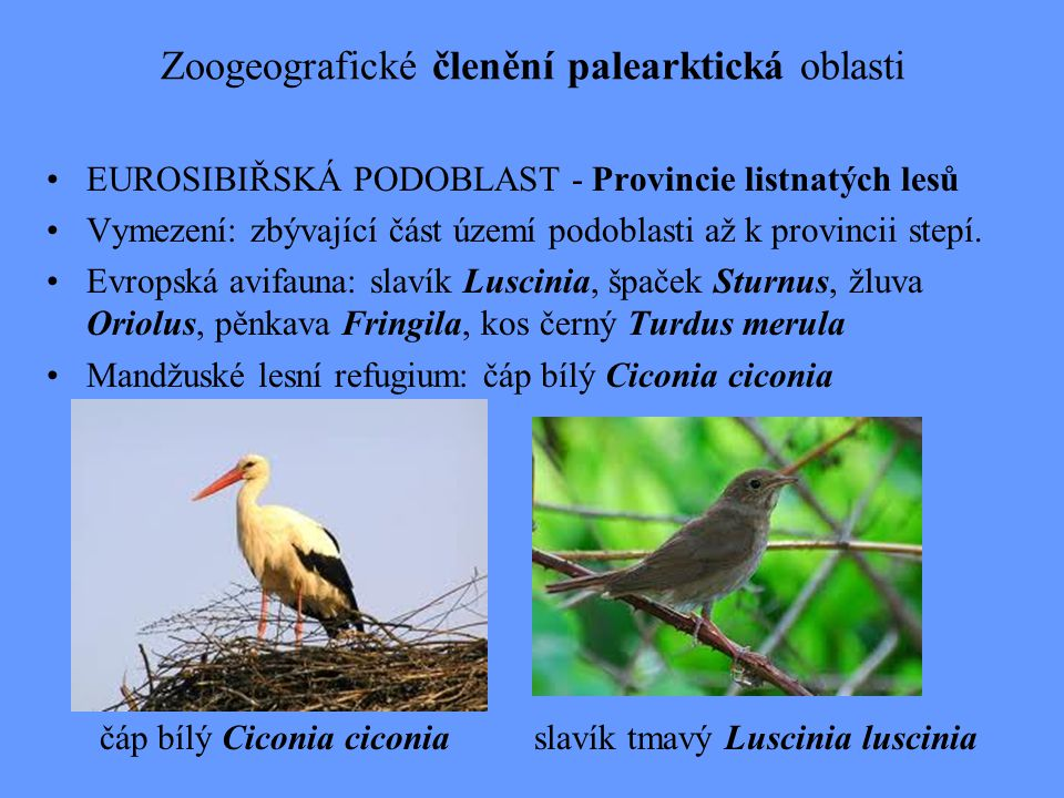 Zoogeografické členění palearktická oblasti EUROSIBIŘSKÁ PODOBLAST - Provincie listnatých lesů Vymezení: zbývající část území podoblasti až k provinci