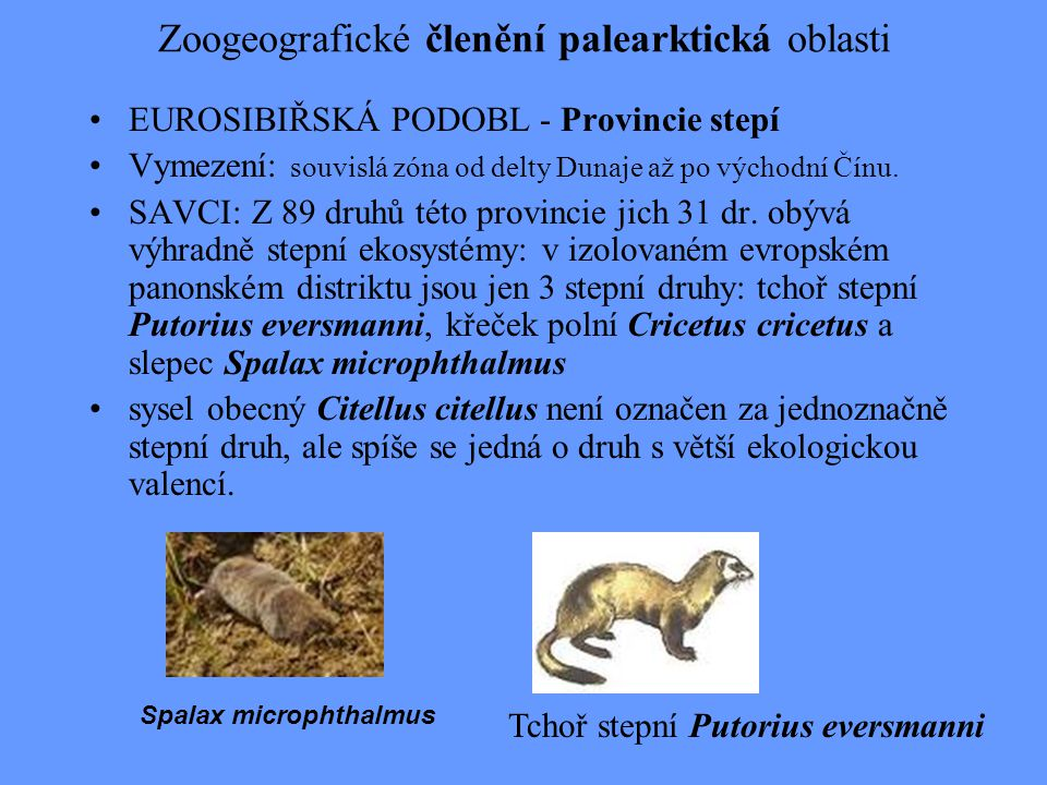 Zoogeografické členění palearktická oblasti EUROSIBIŘSKÁ PODOBL - Provincie stepí Vymezení: souvislá zóna od delty Dunaje až po východní Čínu. SAVCI: