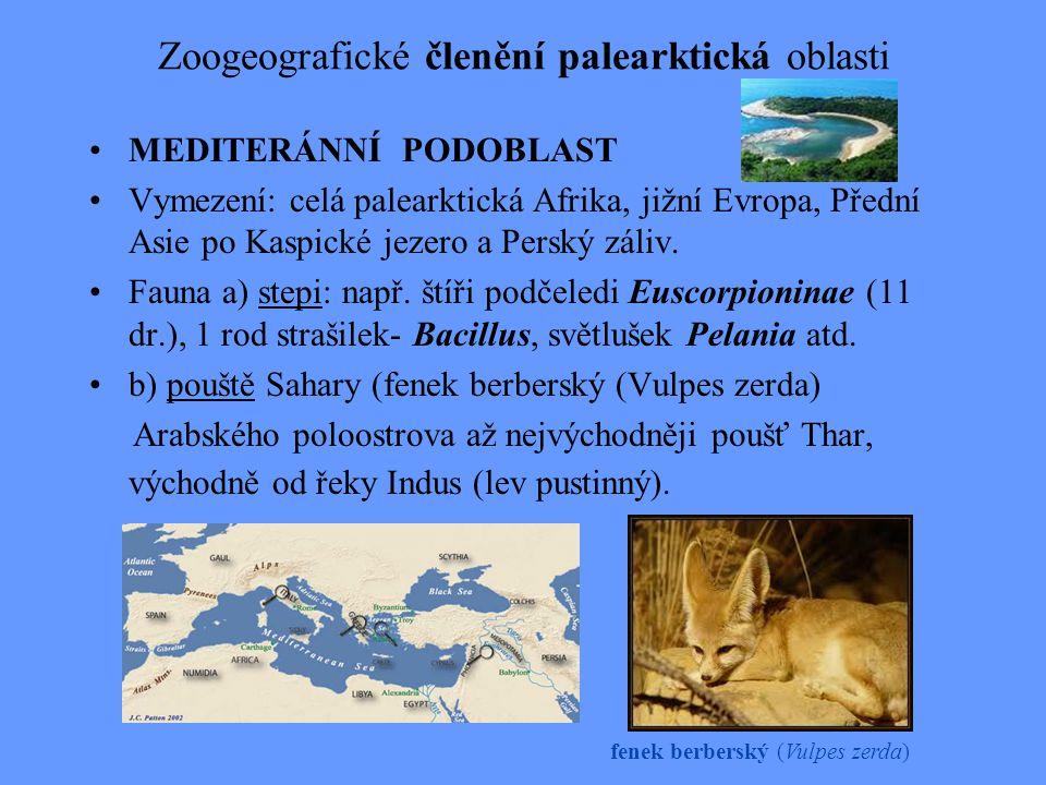 Zoogeografické členění palearktická oblasti MEDITERÁNNÍ PODOBLAST Vymezení: celá palearktická Afrika, jižní Evropa, Přední Asie po Kaspické jezero a P