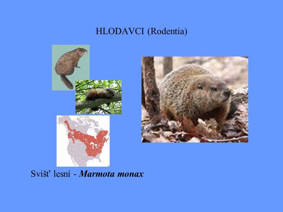 Nearktická zoogeografická oblast PTÁCI: žádná čeleď není endemická, jen 1 subendemickou čeledí jsou Meleagridae - krocanovití, neboť Meleagris ocellata krocan paví je neotropický druh, zatímco M.gallopavo krocan divoký je nearktický druh.