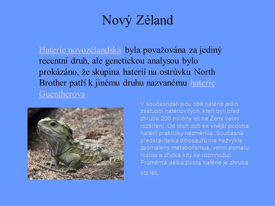 Haterie novozélandskáHaterie novozélandská byla považována za jediný recentní druh, ale genetickou analysou bylo prokázáno, že skupina haterií na ostr