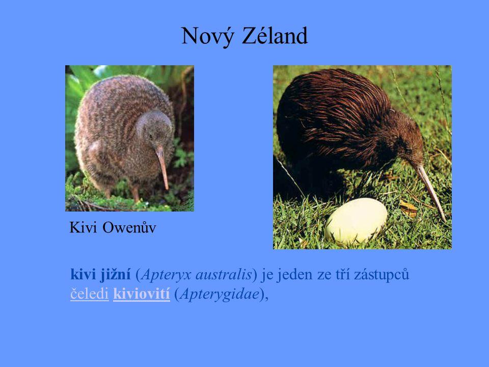 Nový Zéland kivi jižní (Apteryx australis) je jeden ze tří zástupců čeledi kiviovití (Apterygidae), čeledikiviovití Kivi Owenův