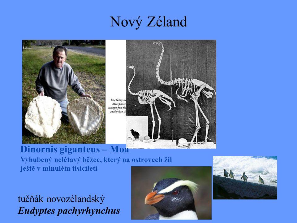 Nový Zéland Dinornis giganteus – Moa Vyhubený nelétavý běžec, který na ostrovech žil ještě v minulém tisíciletí tučňák novozélandský Eudyptes pachyrhy